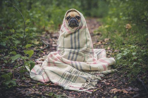 В сезон простуд
